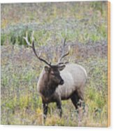 Elk In Wildflowers #1 Wood Print