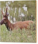 Elk Of Jasper... Wood Print