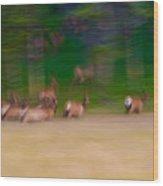 Elk On The Run Wood Print