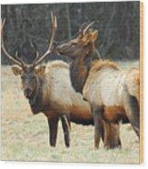 Elk Pair Wood Print