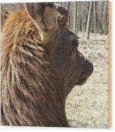 Elk Profile Wood Print