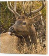 Elk Raspberry For Tom Wood Print