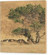 Elk Under Tree Wood Print