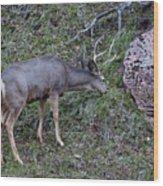 Elk With Antlers Wood Print