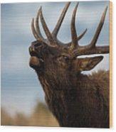Elk's Screem Wood Print