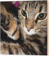 Ellie Cat Wood Print
