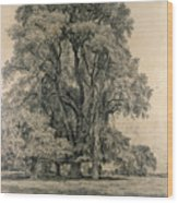 Elm Trees In Old Hall Park Wood Print by John Constable