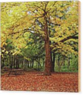 Elora Gorge Campsite In Fall Wood Print
