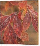 Embers Of Autumn Wood Print