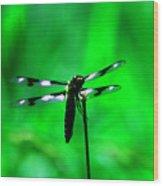 Emerald Dragon Fly Wood Print by Nick Gustafson