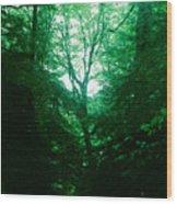 Emerald Glade Wood Print