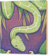Emerald Tree Boa Wood Print