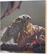 Emerging - Cicada 1 Wood Print