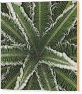 Emerging Palm Wood Print