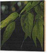 Emmergence  Wood Print