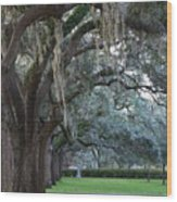 Emmet Park In Savannah Wood Print