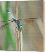 Emperor Dragonfly  Wood Print
