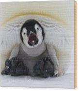 Emperor Penguin Aptenodytes Forsteri Wood Print by Rob Reijnen