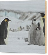 Emperor Penguin Landscape Wood Print