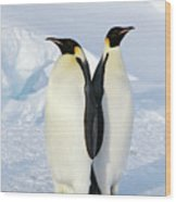 Emperor Penguins, Weddell Sea Wood Print