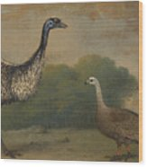 Emu, Cape Barren Goose And Magpie Goose Wood Print