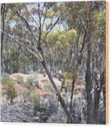 Emus Wood Print
