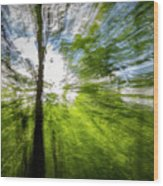 Enchanted Forest 5 Wood Print