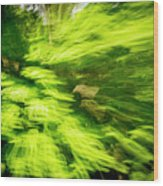 Enchanted Forest 6 Wood Print