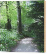 Enchanted Forest At Blarney Castle Ireland Wood Print