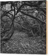 Enchanted Hau Forest Wood Print