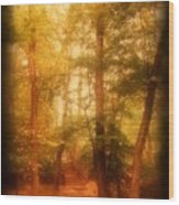 Enchanted Path 2 - Allaire State Park Wood Print