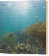 Enchanted Seas Wood Print
