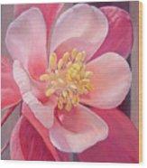 Encolie Wood Print