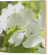 Encyclopedia Of Spring Image Apple Blossom  Wood Print