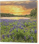 End Of A Bluebonnet Day Wood Print