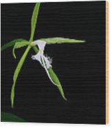 Endemic Orchid-st Lucia Wood Print
