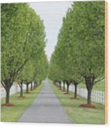 Endless  Country Road Wood Print