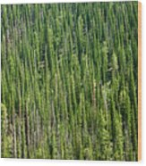 Endless Forest  Wood Print