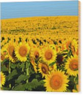 Endless Sunflowers Wood Print