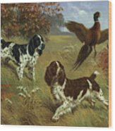 Energetic English Springer Spaniels Wood Print by Walter A. Weber