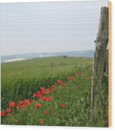 England Sussex Poppy Field Wood Print