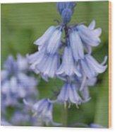 English Bluebell Wood Print