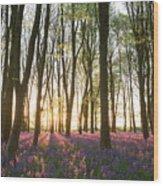 English Bluebell Wood Wood Print