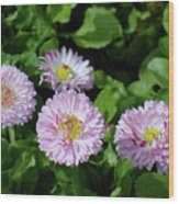 English Daisies Wood Print