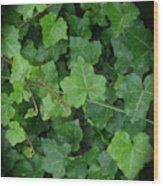 English Ivy Wood Print