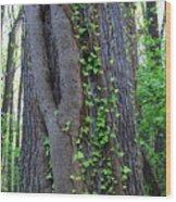 English Ivy Elder Wood Print