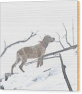 English Redtick Hound   Wood Print