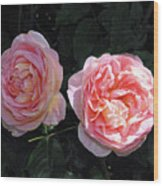 English Rose Pink Abraham Darby  Wood Print