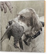 English Setter And Hungarian Partridge - D003092a Wood Print by Daniel Dempster