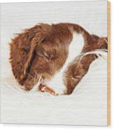 English Springer Spaniel Puppy Sleeping On Fur Wood Print
